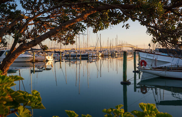 Auckland Harbour Bridge from Westhaven Marina