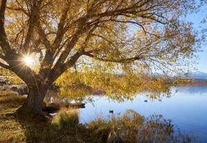 Lake Alexandrina Autumn