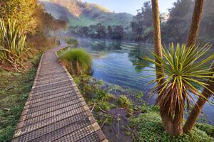 Blue Springs - Te Waihou Walkway