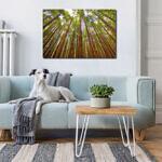 redwoods_canvas_print