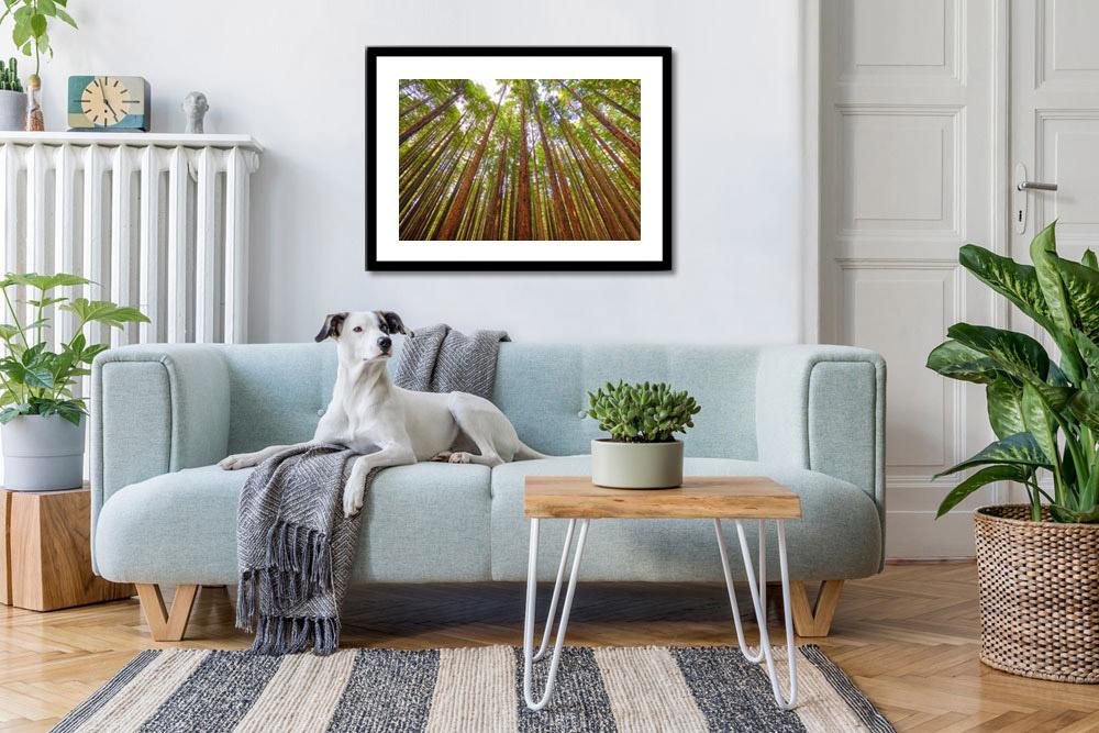redwoods_framed_print